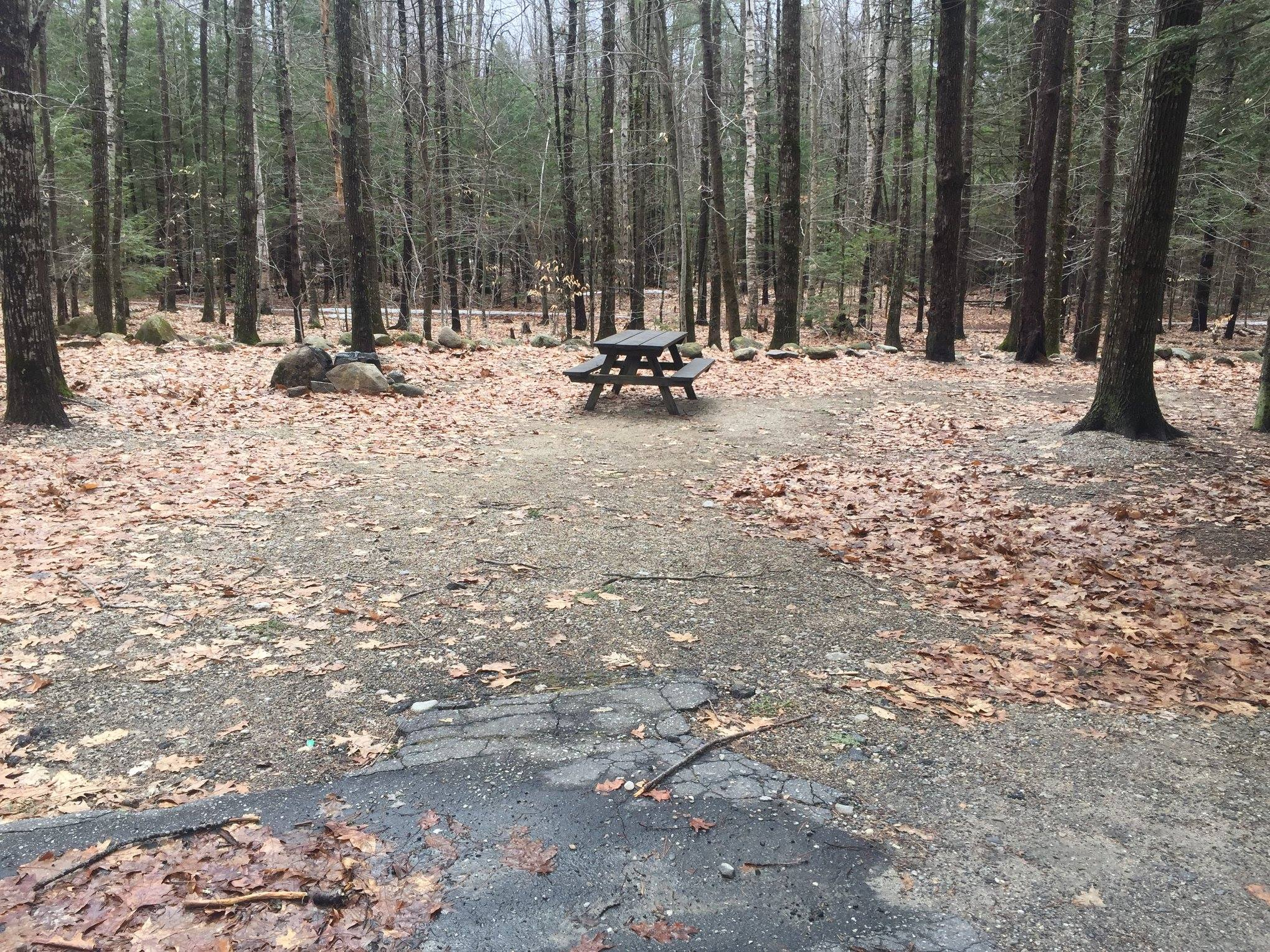 Photo of campsite at Bradbury Mountain State Park